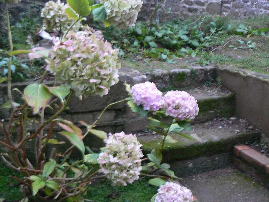 Aménagement d''un espace terrasse dans un jardin de ville - SAINT-BRIEUC p1220777